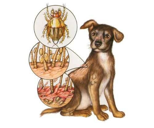 Как избавиться от сыпи у собак